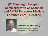 β2 adrenergic receptor complexes mediate localized cAMP signaling
