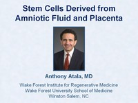Stem cells derived from amniotic fluid and placenta