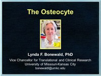 The osteocyte
