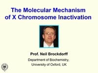 The molecular mechanism of X chromosome inactivation