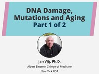 DNA damage, mutations and aging 1