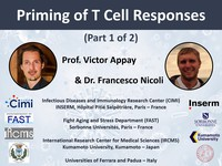 Priming of T cell responses 1