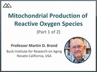 Mitochondrial production of  reactive oxygen species 1