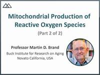 Mitochondrial production of reactive oxygen species 2
