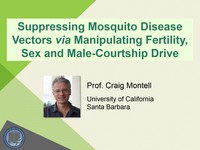 Suppressing mosquito disease vectors via manipulating fertility, sex and male-courtship drive