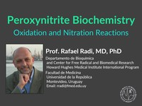 Peroxynitrite biochemistry oxidation and nitration reactions