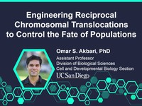 Engineering reciprocal chromosomal translocations to control the fate of populations