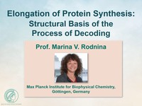 Elongation of protein synthesis: structural basis of the process of decoding
