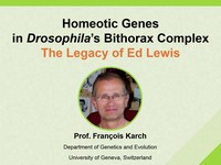 Homeotic genes in Drosophila's bithorax complex - The legacy of Ed Lewis